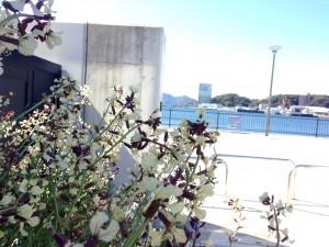 写真 2014-04-04 9 44 21